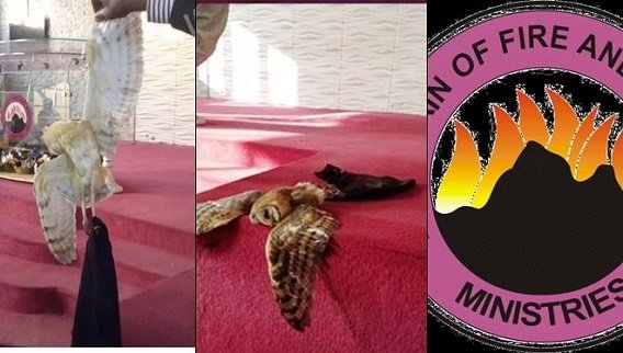 Unbelievable! Owl Flies Inside MFM HQ Church With Skimpy Skirt (See Photo)